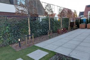 Complete Brabantse tuin